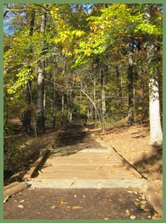 Poem Forest