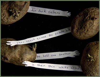 "A K Boyle - ""In dark cellars..."""