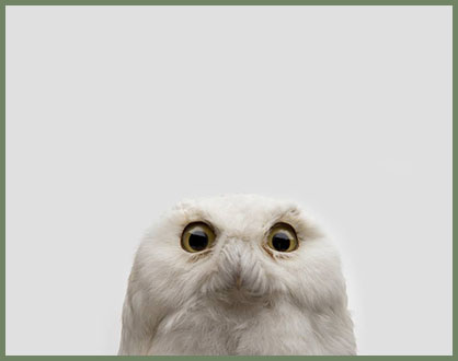 Creative tourist owl